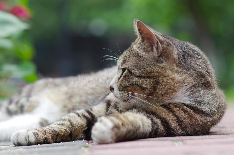 наблюдать кота стоковое изображение rf