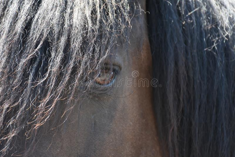 Наблюдать лошади близкий поднимающий вверх стоковые фотографии rf