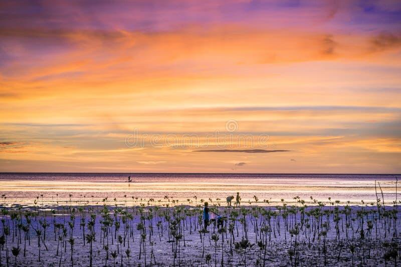 Наблюдать мангровы захода солнца стоковое фото