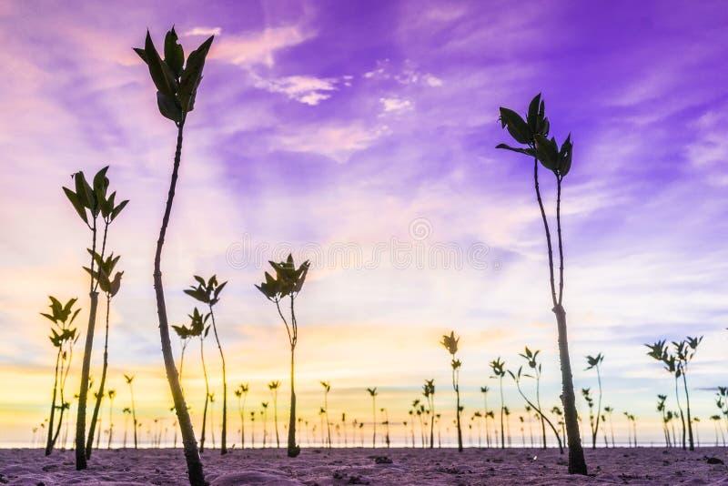 Наблюдать мангровы захода солнца стоковая фотография