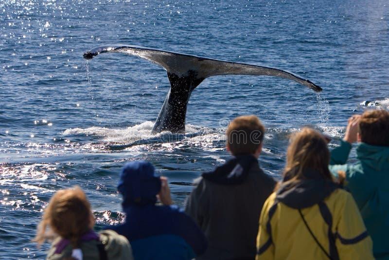 наблюдая кит стоковые фотографии rf