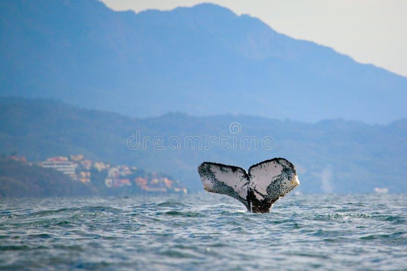 наблюдая кит стоковые изображения