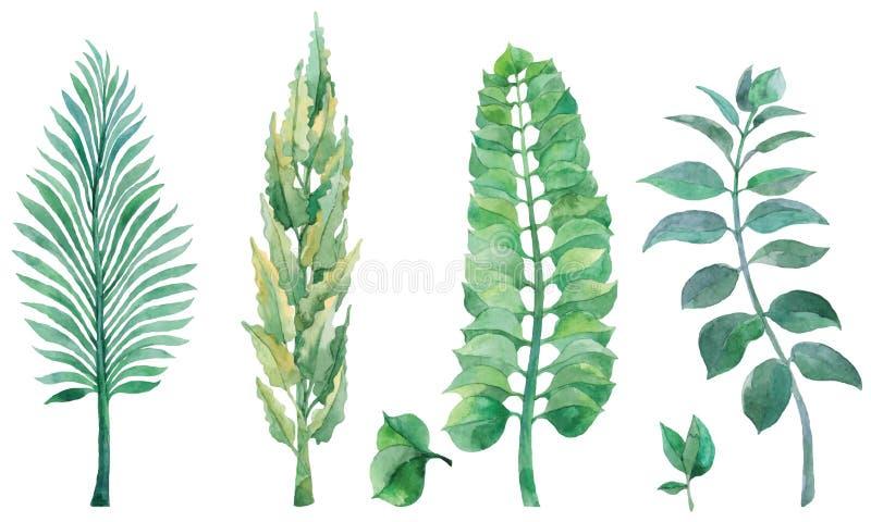 Набор акварели покрашенный рукой с зелеными листьями стоковые изображения
