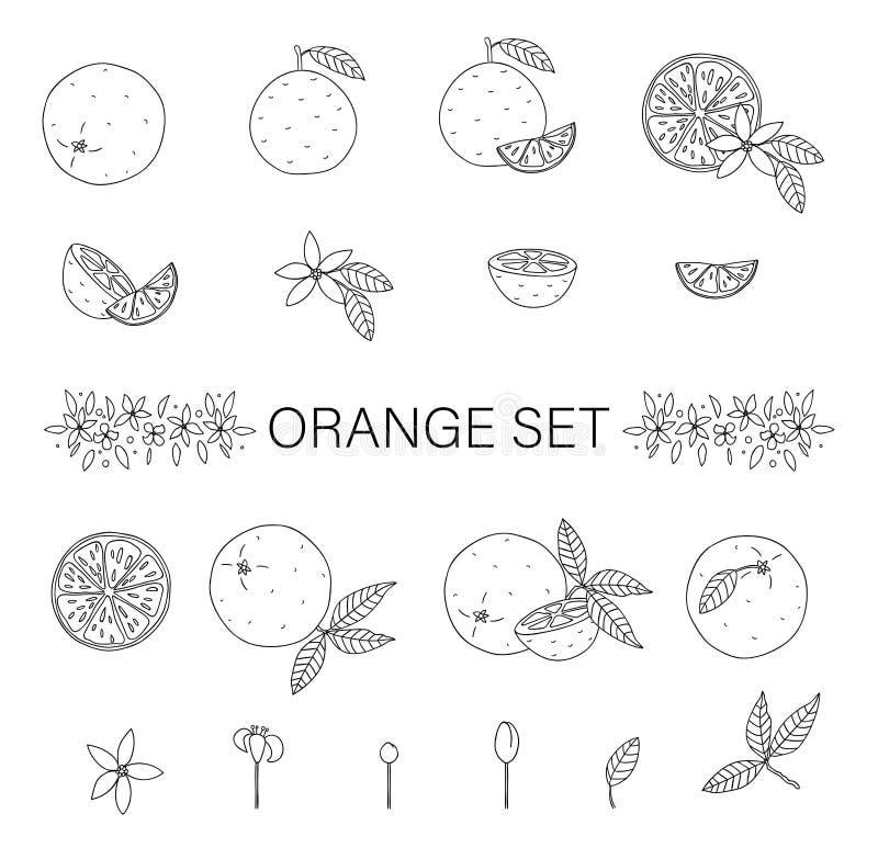 Набор вектора черно-белый апельсинов изолированных на белой предпосылке иллюстрация вектора