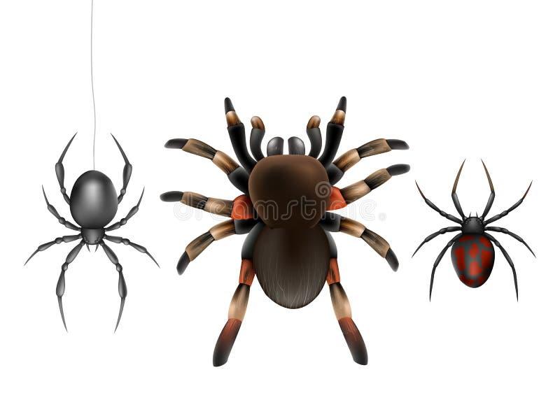 Набор вектора ядовитого вида пауков реалистический бесплатная иллюстрация