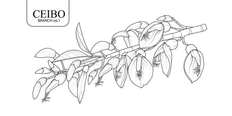 Набор 1 ветви Ceibo стоковое фото rf