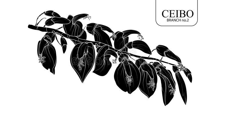 Набор 2 ветви Ceibo стоковые изображения rf