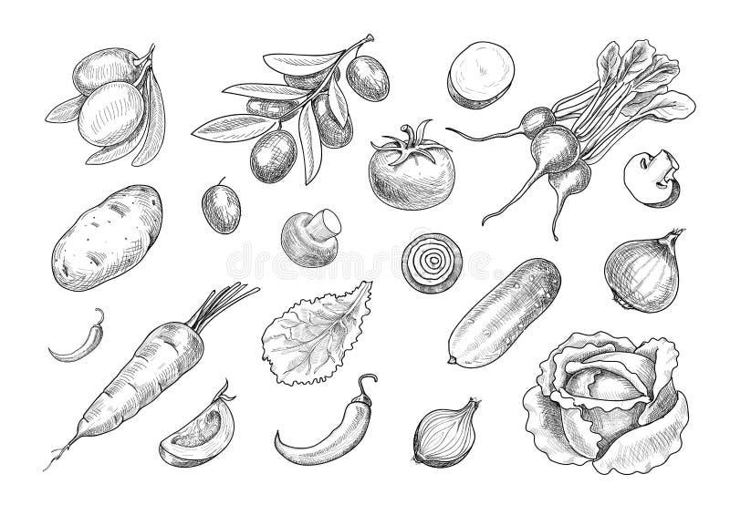 Набор овощей вычерченного эскиза руки различный иллюстрация вектора