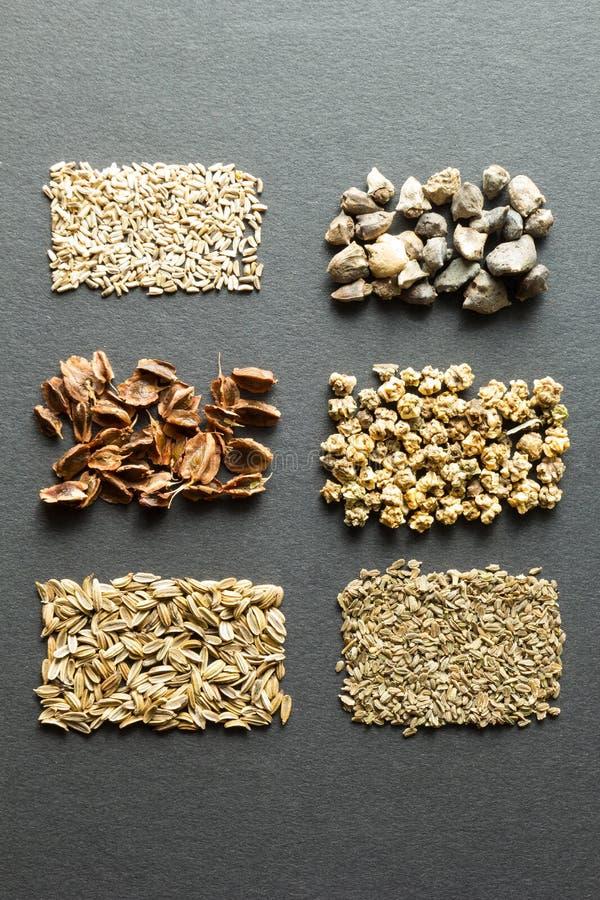 Набор органических семян для естественного сельского хозяйства, верт стоковые изображения rf