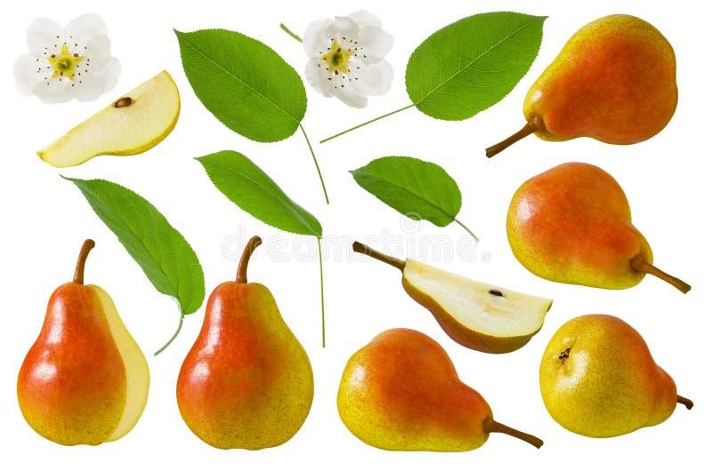 Набор плода груши красный желтый с куском, цветком и зелеными лист изолированными на белой предпосылке Собрание для комплексного  стоковая фотография rf