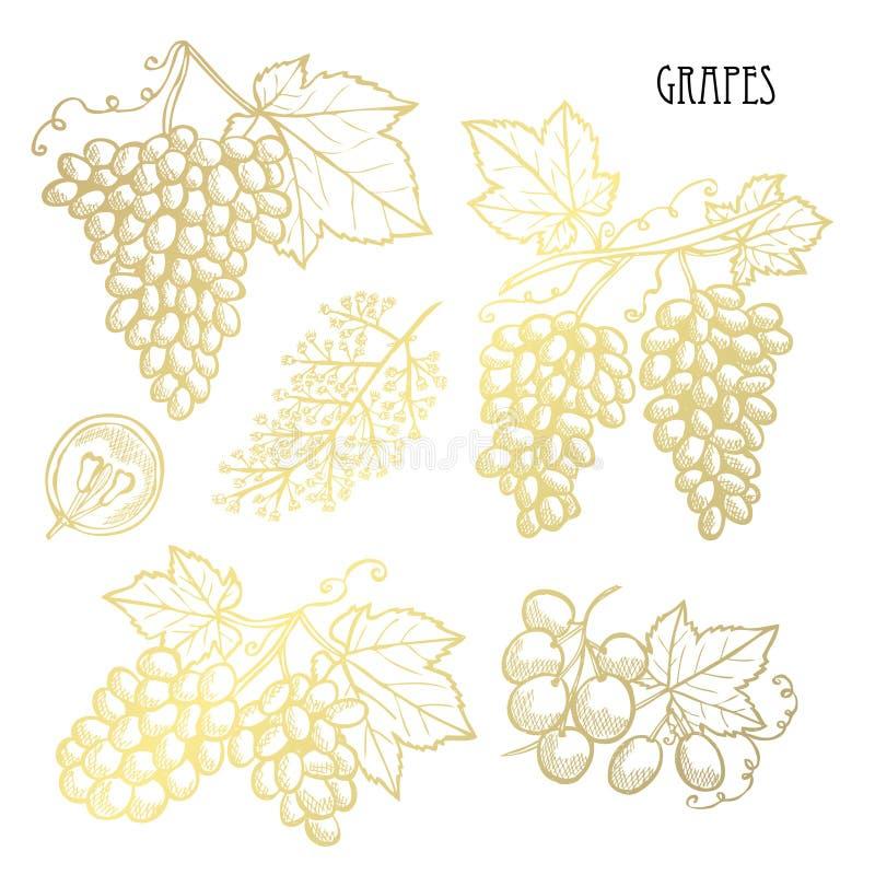 Набор плодов руки вычерченный золотой бесплатная иллюстрация
