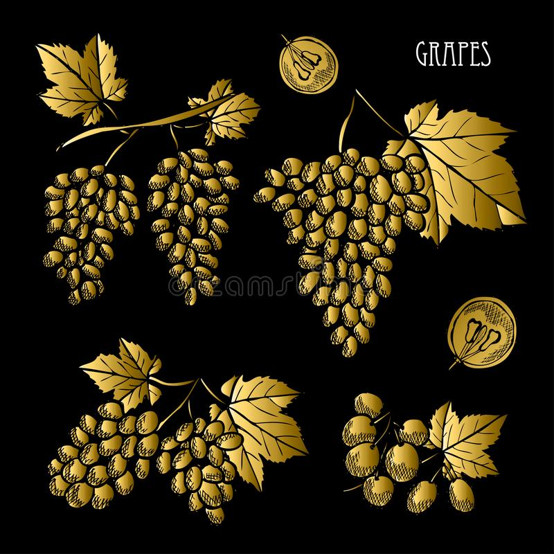 Набор плодов руки вычерченный золотой иллюстрация штока