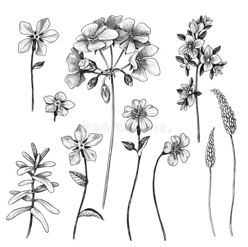 Набор полевых цветков руки вычерченный бесплатная иллюстрация