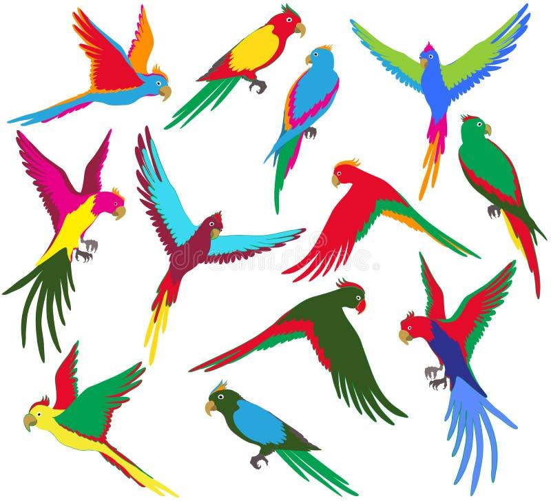 Набор попугая джунглей вектора красочный иллюстрация штока