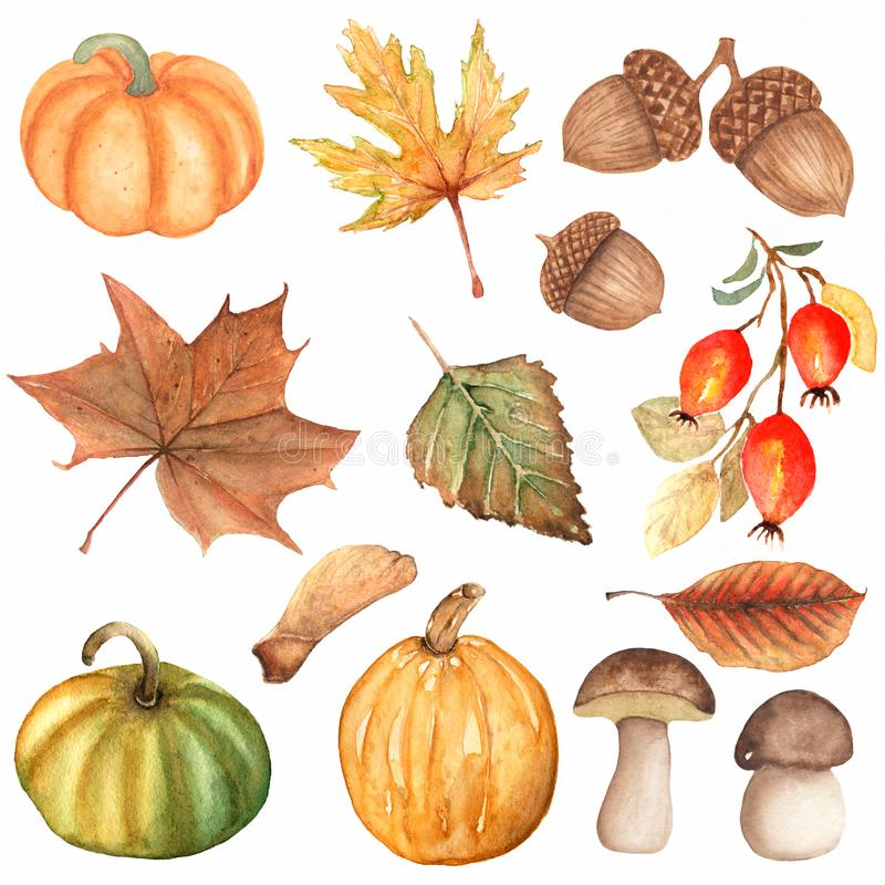 Набор руки акварели вычерченный элементов тыквы осени, гриба, ягод dogrose, листьев дуба, лист березы, жолудя Осень акварели иллюстрация вектора