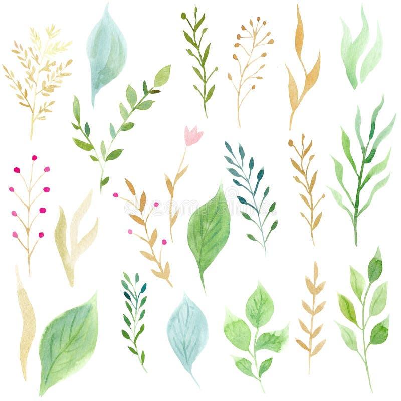 Набор руки покрасил листья и завтрак-обеды зеленого цвета акварели иллюстрация штока