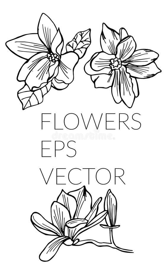 Набор руки цветка вычерченный иллюстрация штока