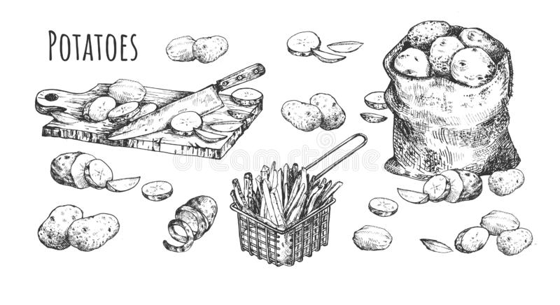 Набор рынка фермеров натюрморта картошек иллюстрация вектора