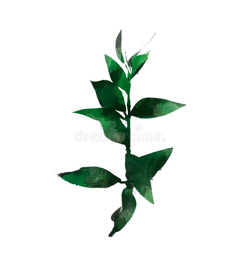 Набор элемента акварели современный декоративный Венок лист эвкалипта круглый зеленый, ветви растительности, гирлянда, граница, р иллюстрация штока