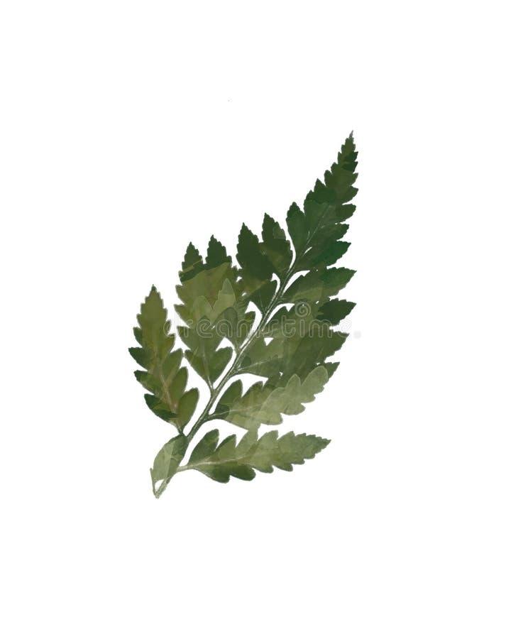 Набор элемента акварели современный декоративный Венок лист эвкалипта круглый зеленый, ветви растительности, гирлянда, граница, р иллюстрация вектора