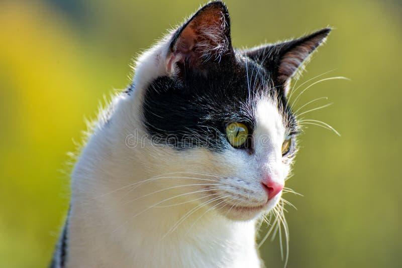 Наблюдаемый кот сидя на балконе и его окрестностям стоковое фото