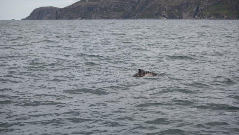 Наблюдать морского свиньи стоковые фото