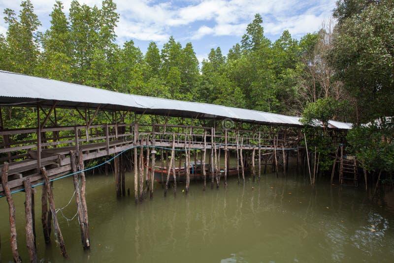 Наведите пересекая brackish воду в лесе мангровы, Таиланд стоковые фото