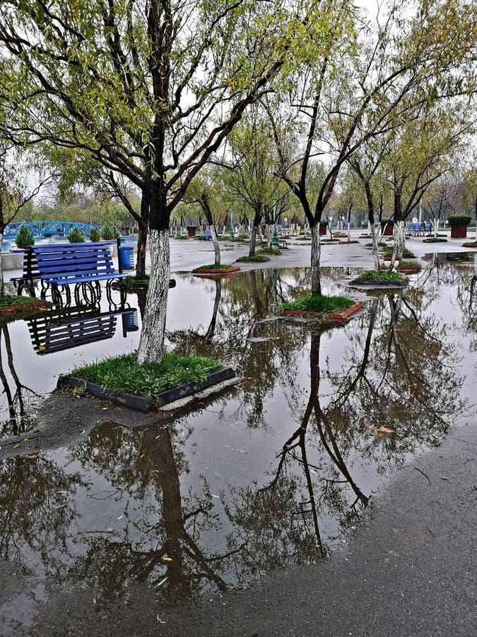 Наводнение - в парке после дождя стоковая фотография rf