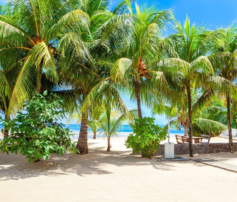 Наглядная сцена тропического пляжа с белыми песком и пальмами, Mahe, Сейшельскими островами стоковая фотография rf