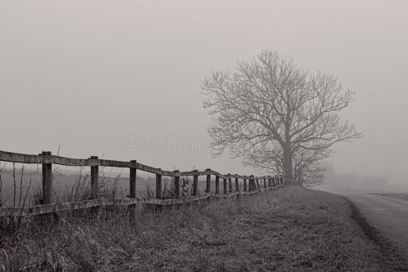 Нагое дерево в помохе стоковые фотографии rf