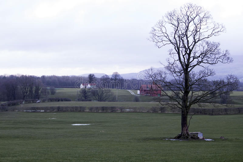 Нагое дерево в сельской местности Великобритании стоковые изображения rf