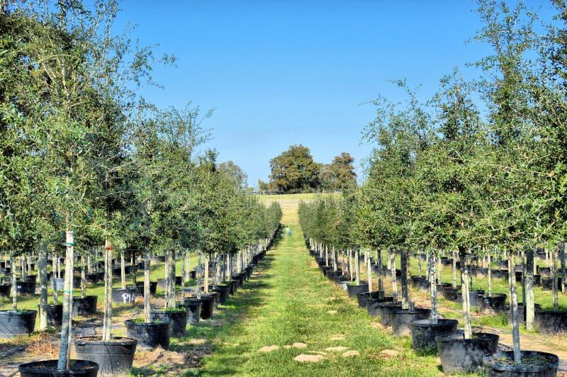 Нагруженные деревья стоковые фото