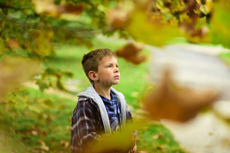 Надежда и мечты Мальчик вполне надежды на светлое будущее Мальчик daydreaming в саде Я делаю надежду стоковые изображения rf