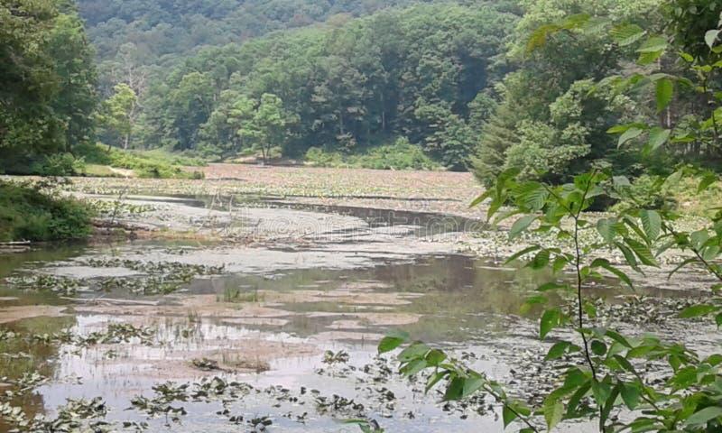 Надежда озера стоковое изображение rf