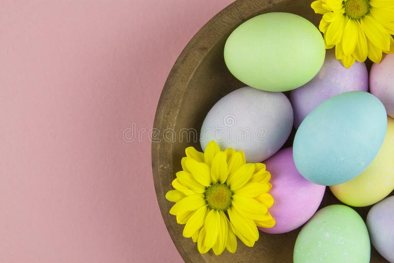 Надземный взгляд пастельных покрашенных пасхальных яя с маргаритками в деревенском деревянном шаре на розовой предпосылке стоковое изображение rf