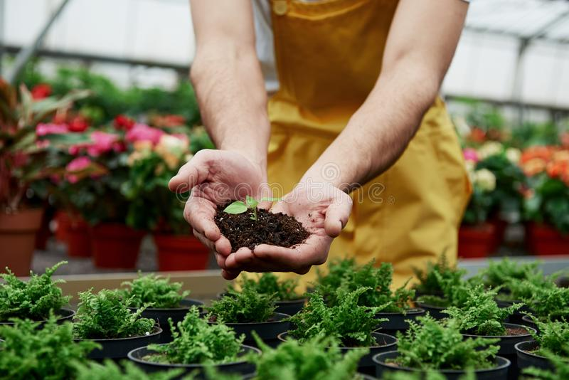 Над вазами Менсы держат землю за руки, а растение в середине мало стоковая фотография rf