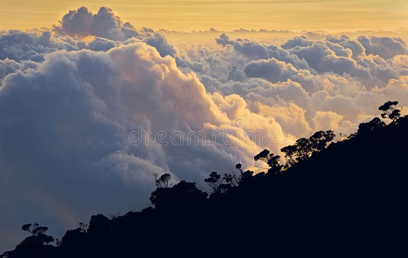 Над тропическим лесом стоковое фото rf