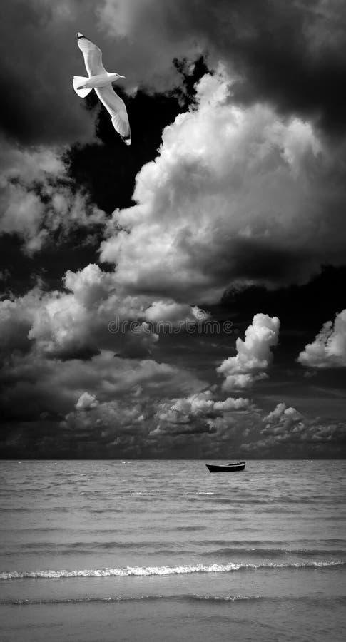 над чайкой моря Черное & белое фото искусства стоковое изображение