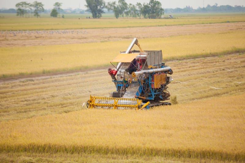 Наемный сельскохозяйственный рабочий жать рис с машиной зернокомбайна стоковое фото