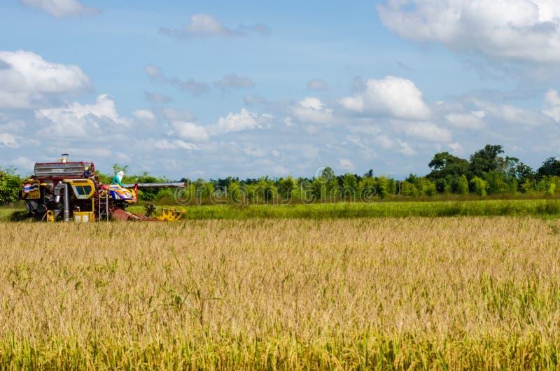Наемный сельскохозяйственный рабочий жать рис с трактором стоковая фотография