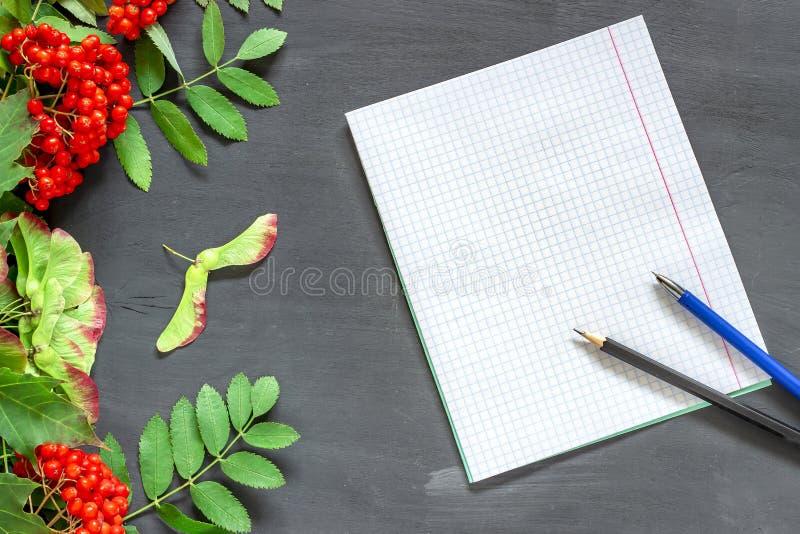 Назад в школу: ветвь, тетрадь, карандаши и ручка рябины Тема осени школы к 1-ому сентября стоковое изображение rf