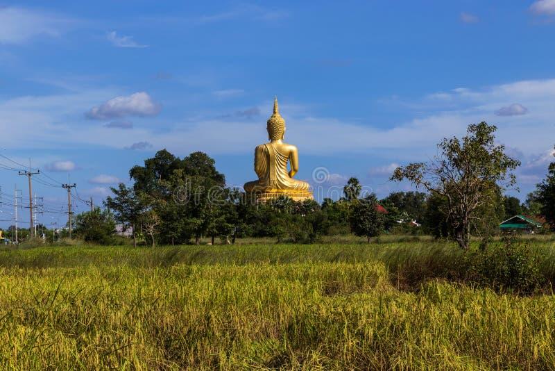 Назад большой золотой статуи Будды сидя с передним планом на поле риса стоковые изображения rf