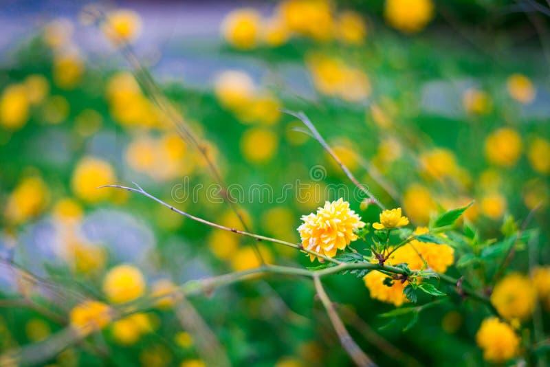 Download Назовите неизвестные цветки на стороне дороги весной Стоковое Фото - изображение насчитывающей промахов, листья: 81802470