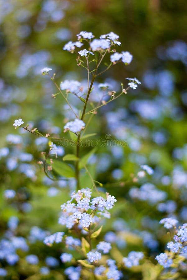 Download Назовите неизвестные цветки на стороне дороги весной Стоковое Фото - изображение насчитывающей цвет, сирень: 81802710