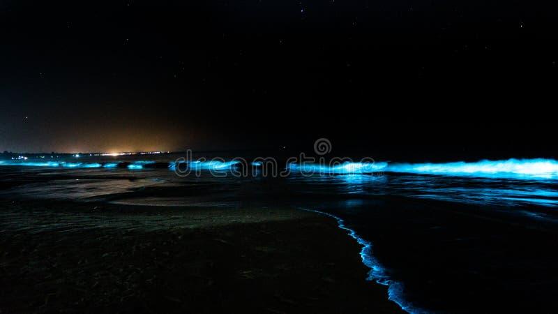 Накаляя биолюминесцентный пляж с накаляя волнами стоковое изображение