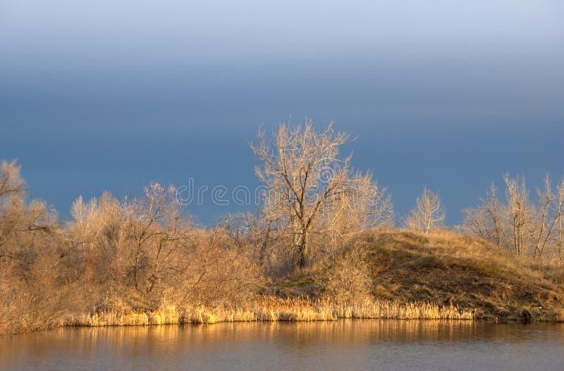 накаляя золотистый солнечний свет берега утра озера стоковое изображение