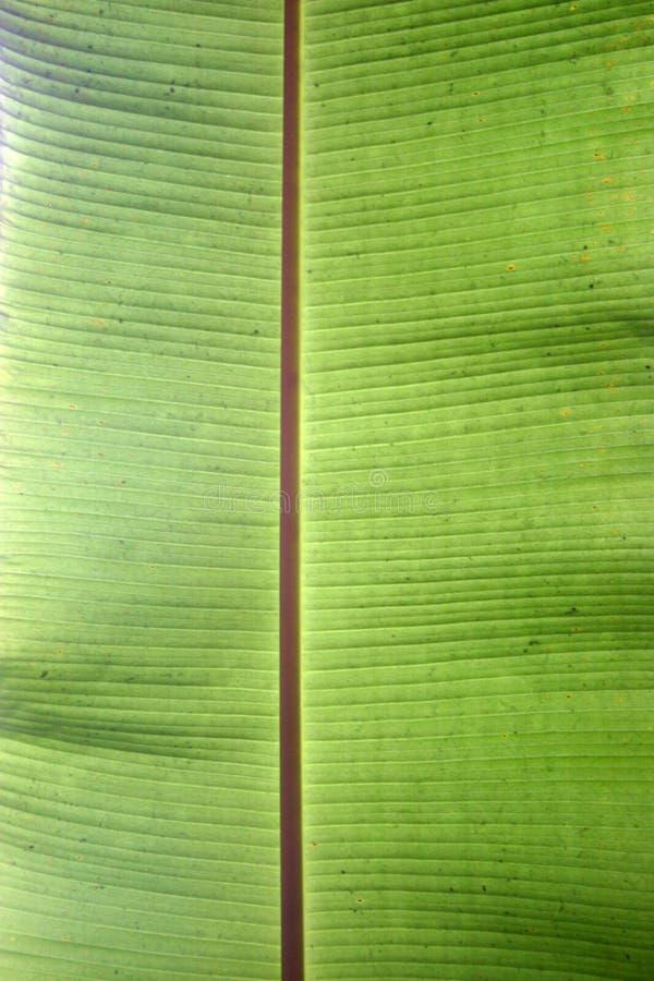 накаляя текстура листьев стоковые изображения rf