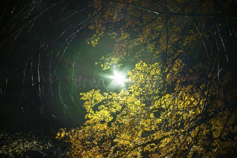 Накаляя уличный свет в листве на ноче стоковые фотографии rf