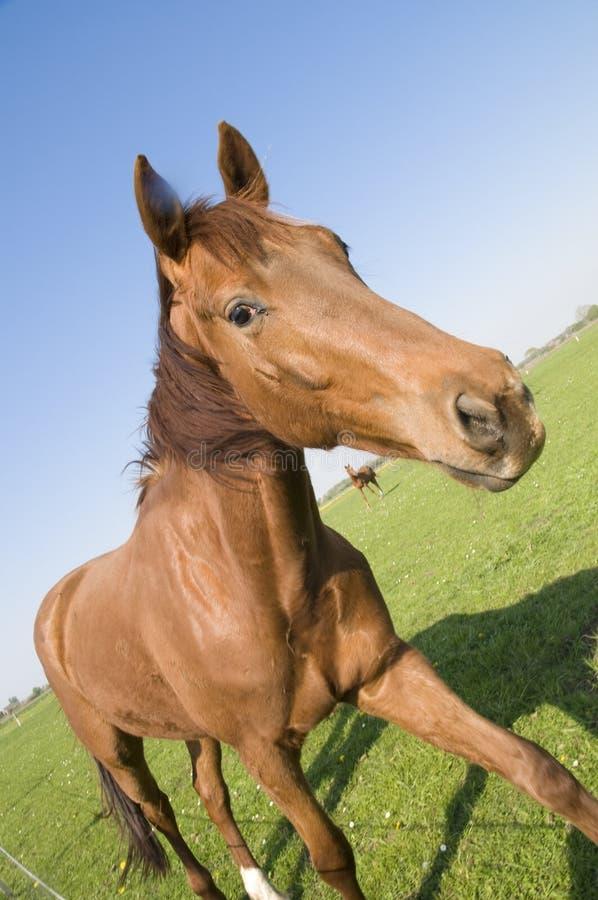 наклонять лошади стоковая фотография