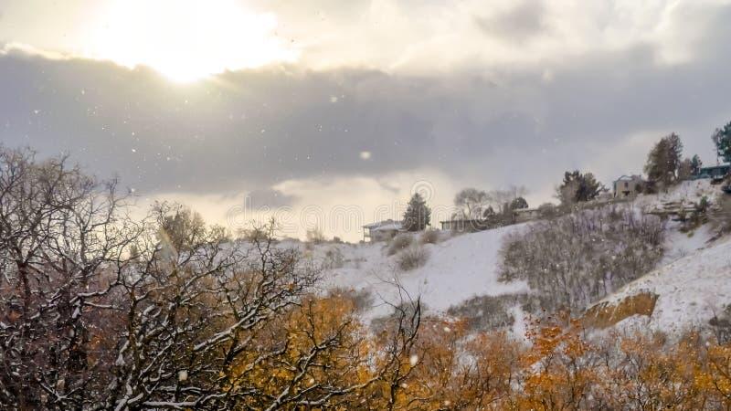 Наклон горы панорамы с травами и деревьями укрыванными со снегом в зиме стоковая фотография